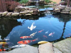 Строительство пруда для разведения рыбы