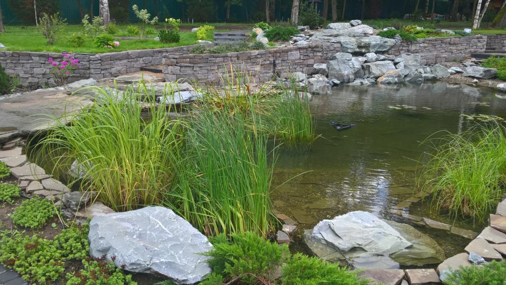строительство декоративного пруда с отделкой береговой зоны москва