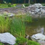 декоративный пруд с отделкой береговой зоны москва