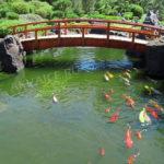 Строительство пруда с рыбками