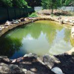 Строительство декоративного водоема