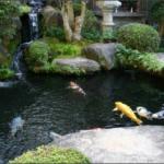 пруд для разведения рыб 50 кв метров