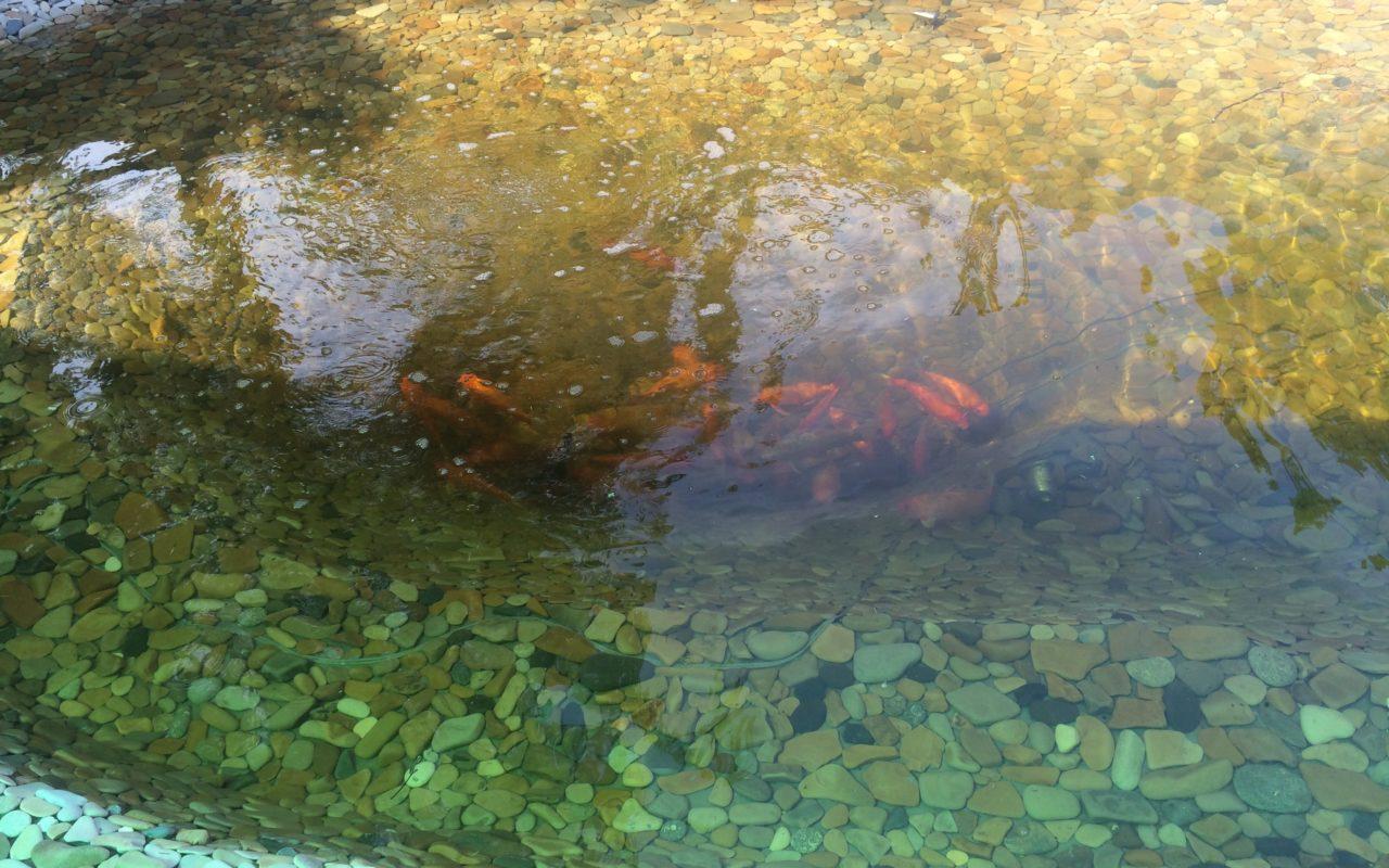 Пруд для разведения рыбы построим в Тамбове