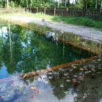 Декорпативный пруд